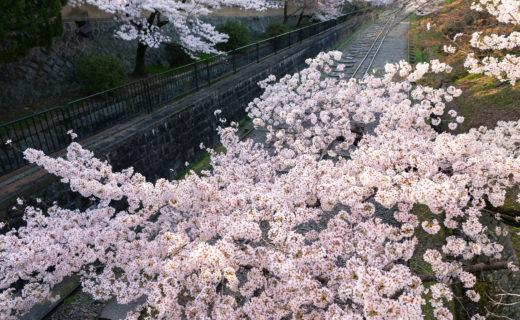 京都-蹴上インクライン-桜-風景