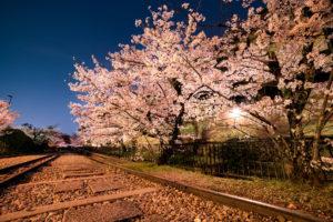 京都-蹴上インクライン-桜