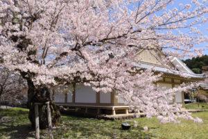 京都-醍醐寺-桜-イメージ