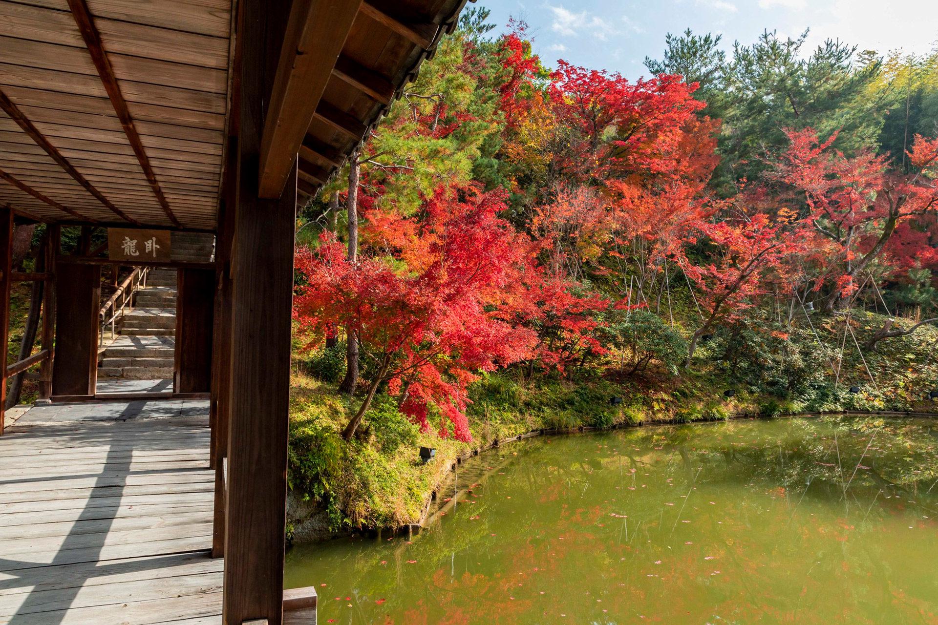 京都-高台寺-秋