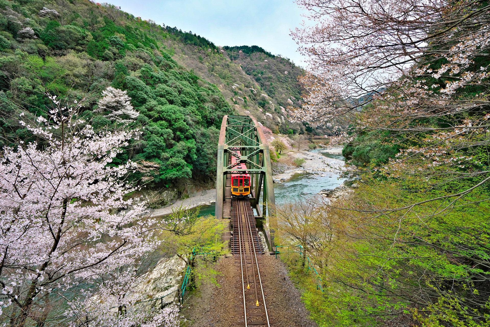 嵯峨野-トロッコ-桜