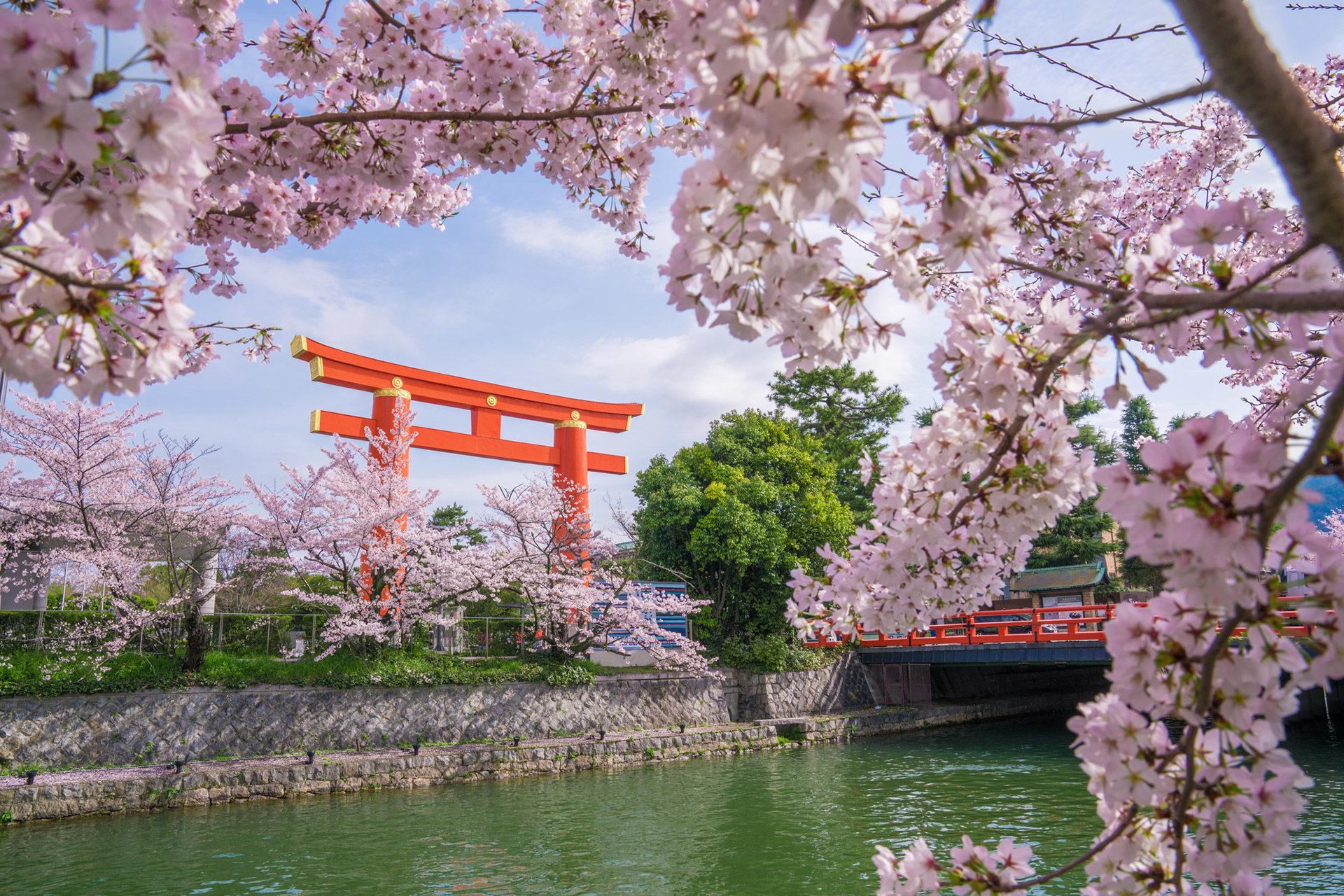 平安神宮-桜-スポット