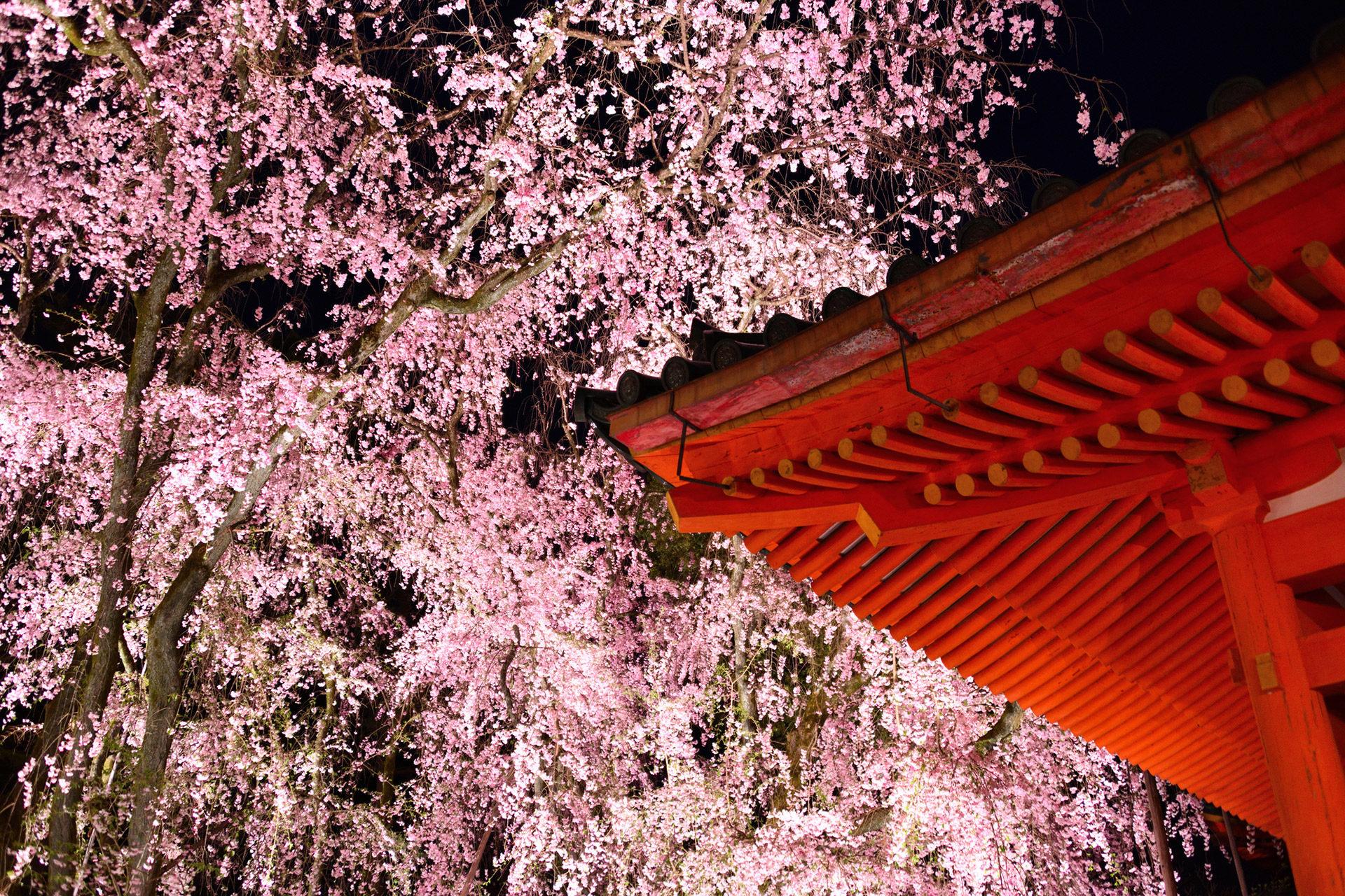 平安神宮-桜-ライトアップ