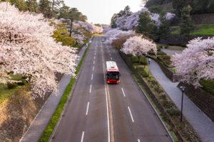 桜-バスツアー-イメージ-風景
