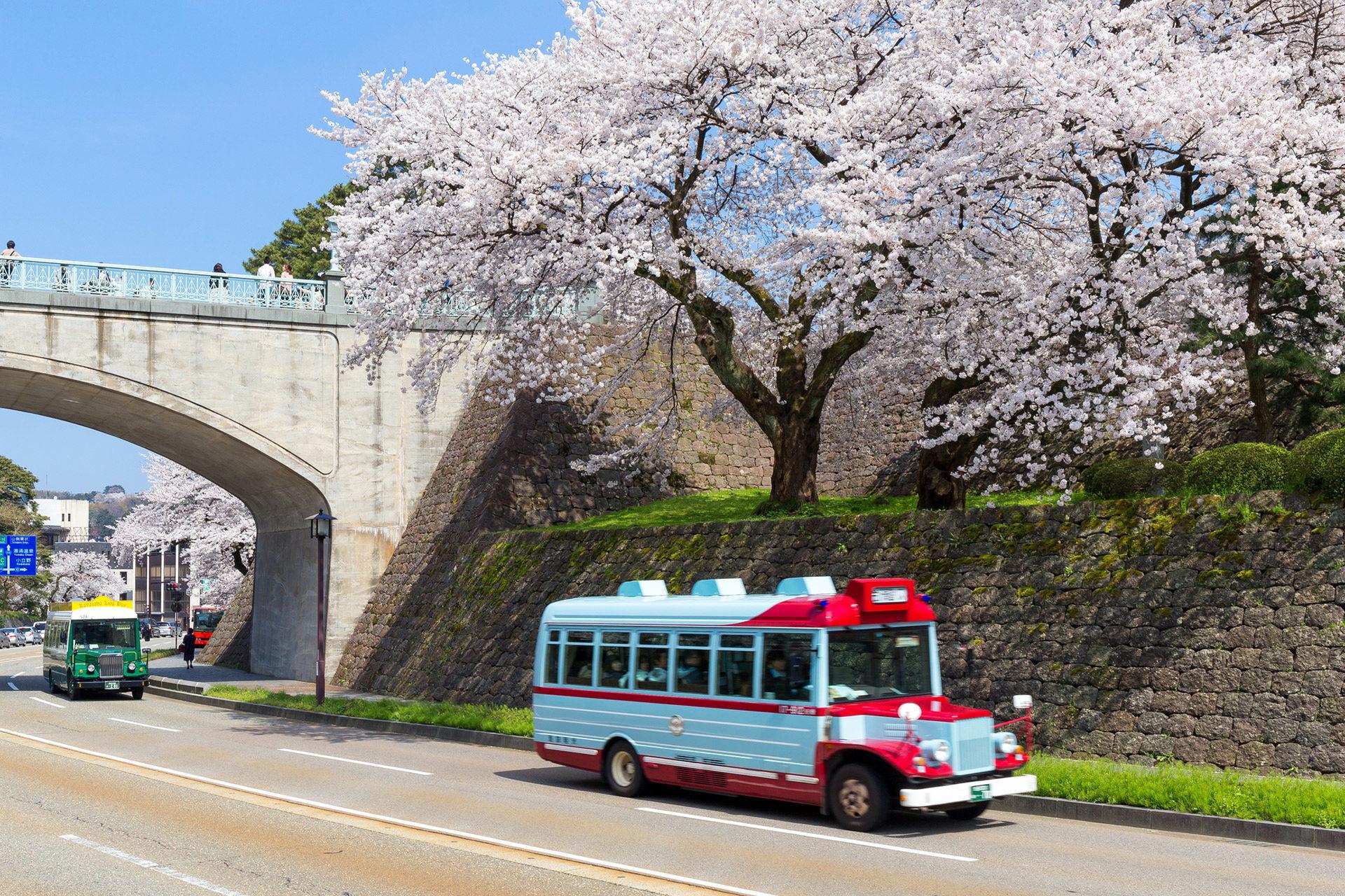 桜-バスツアー-イメージ