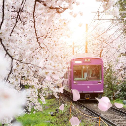 桜-路線-イメージ