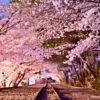 蹴上インクライン-桜のトンネル