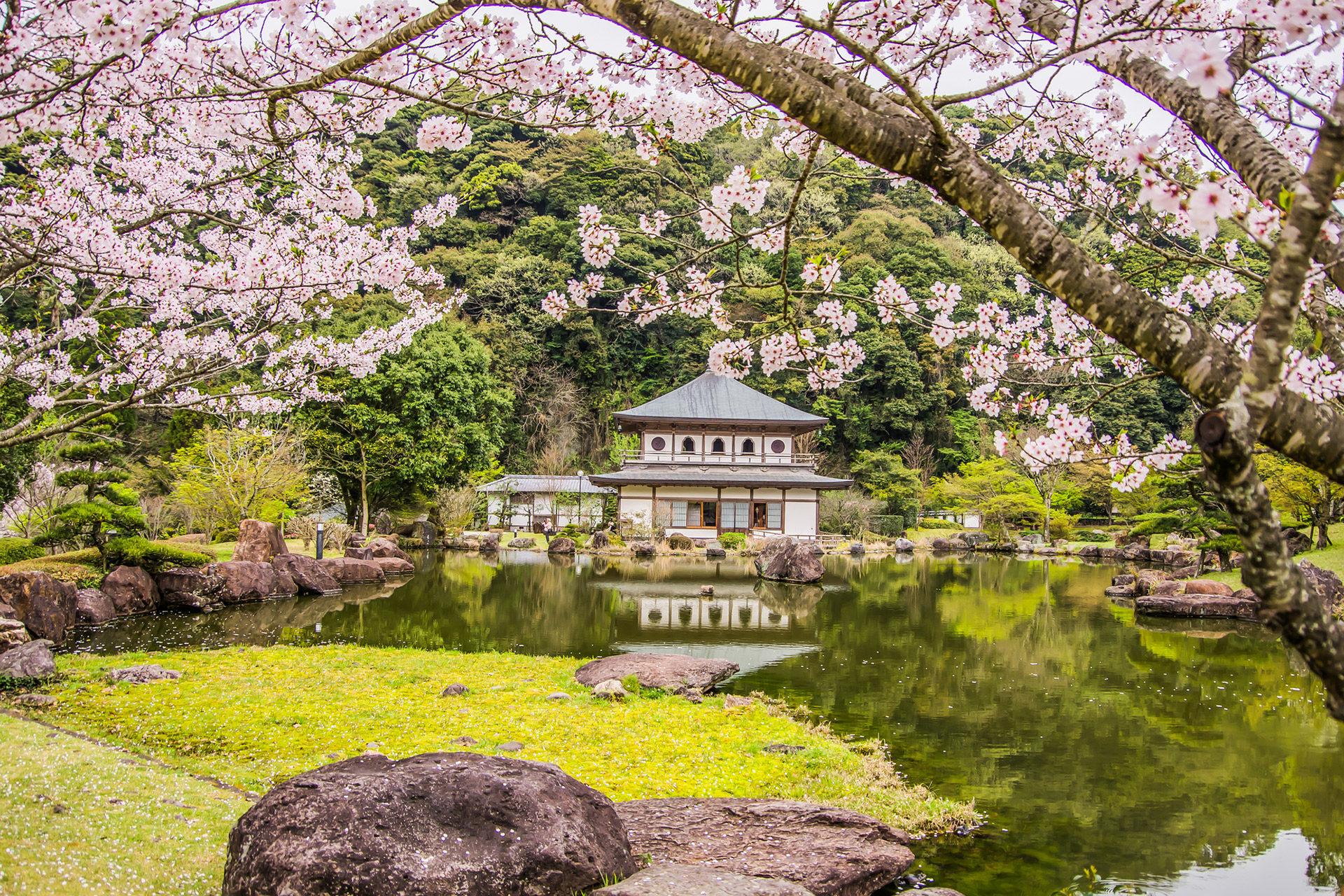 金閣寺-桜