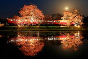 電車-桜-ライトアップ