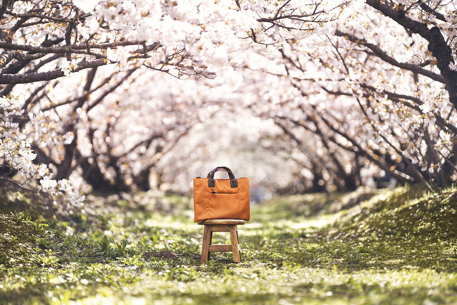 仁和寺御室桜 サーベラス