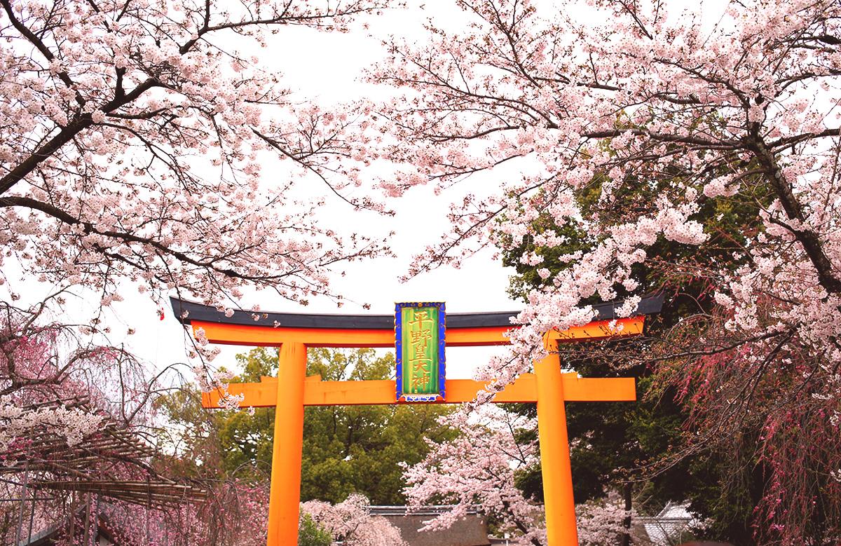 平野神社 桜花祭