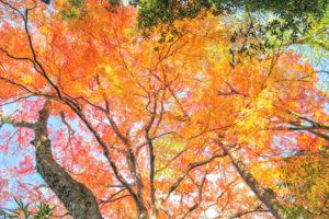 京都の哲学の道紅葉
