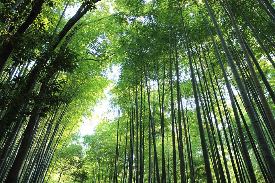 京都_嵐山_竹林の道