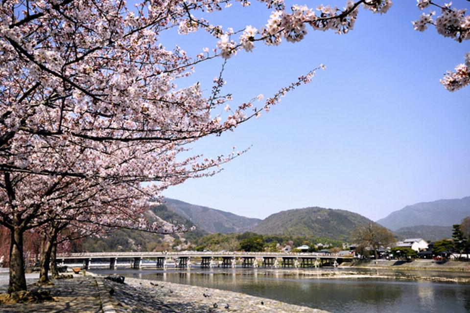 京都_渡月橋_桜