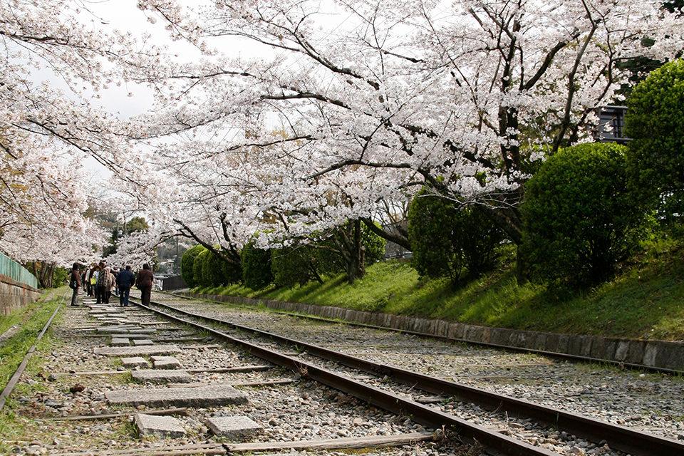 京都_蹴上インクライン_桜