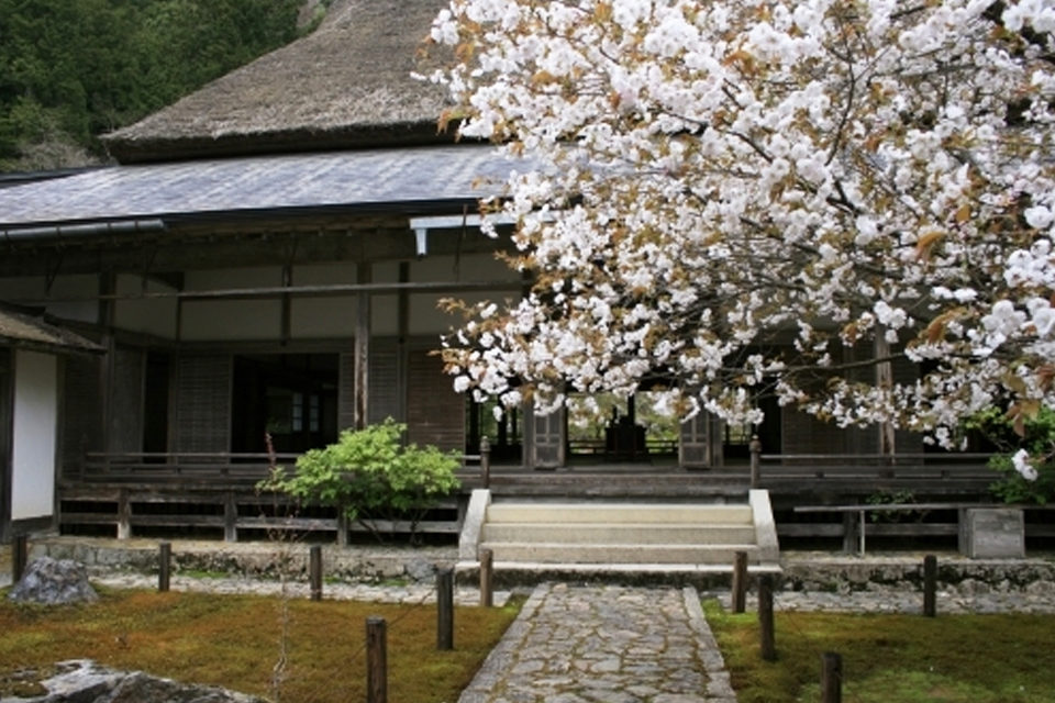 常照皇寺と桜