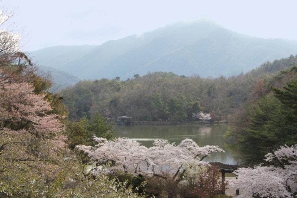 春の宝が池公園