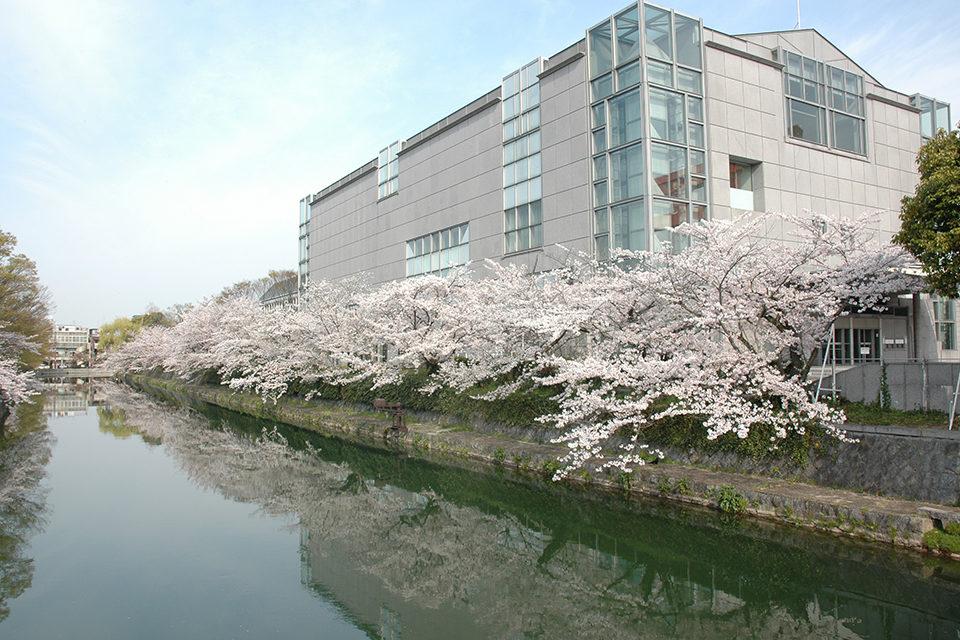 琵琶湖疏水_桜