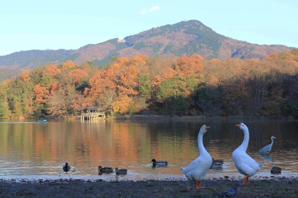 秋の宝が池公園