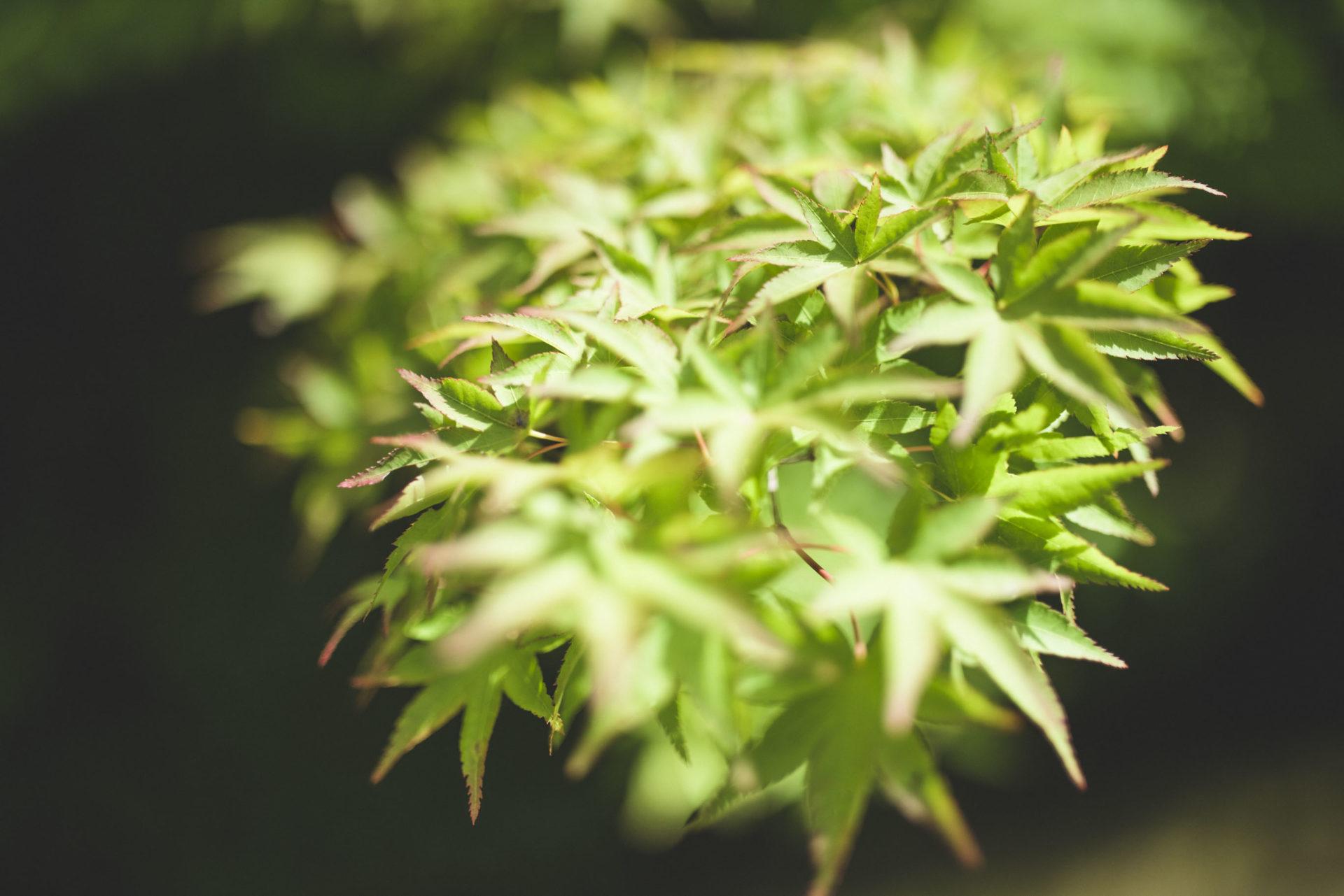 宝泉院 青紅葉