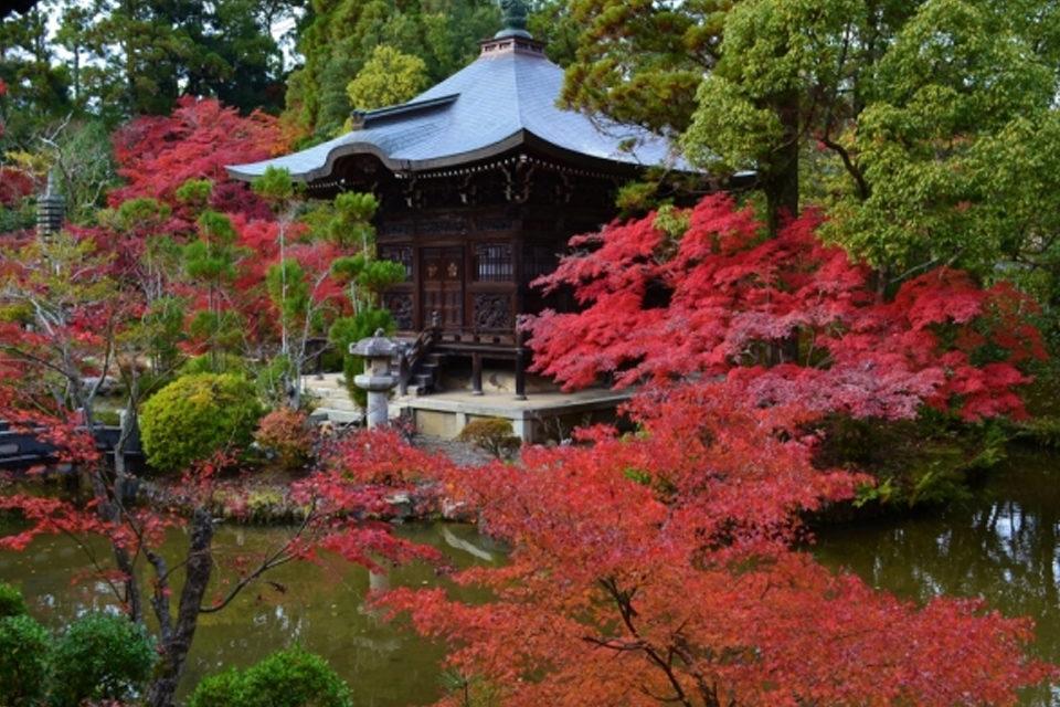 清凉寺と紅葉