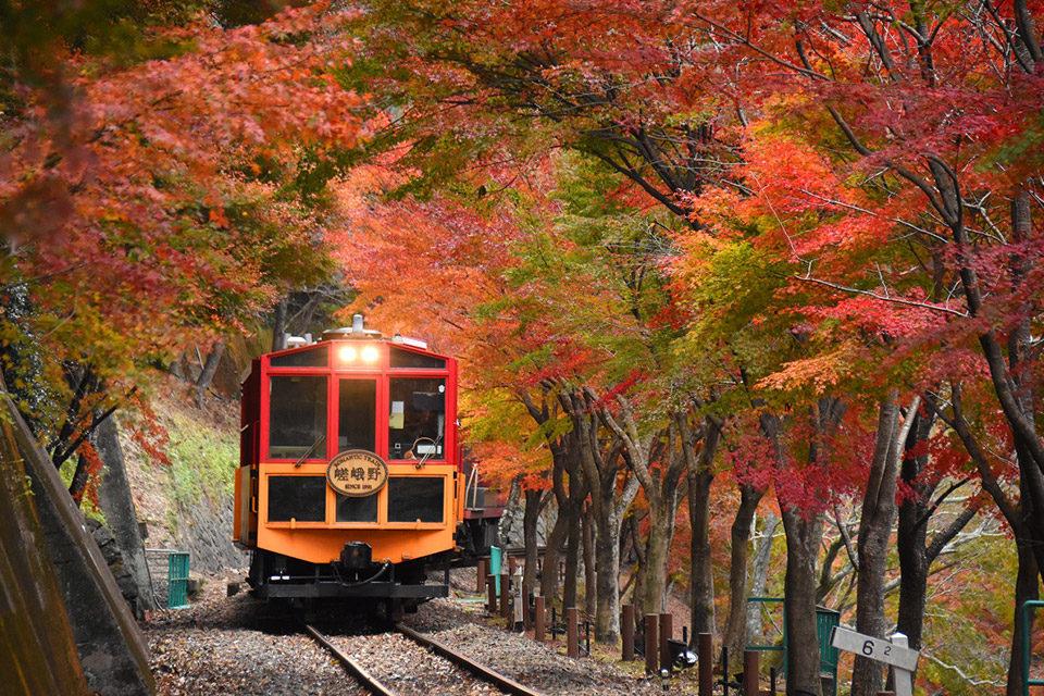 嵯峨野トロッコ列車_紅葉