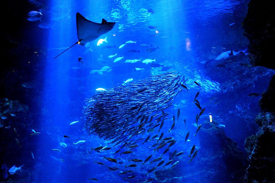 京都水族館の大水槽_京の海