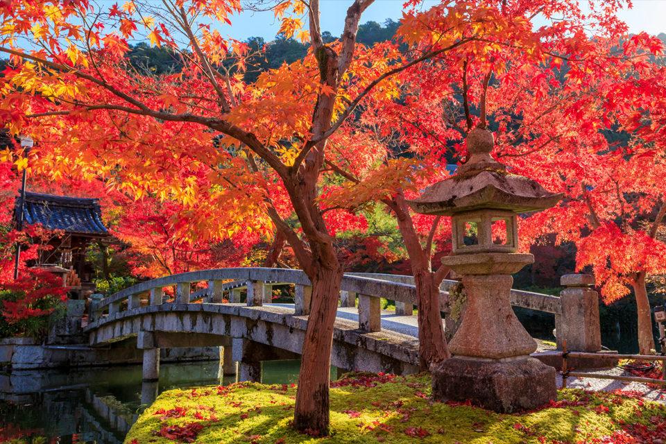 京都 永観堂紅葉