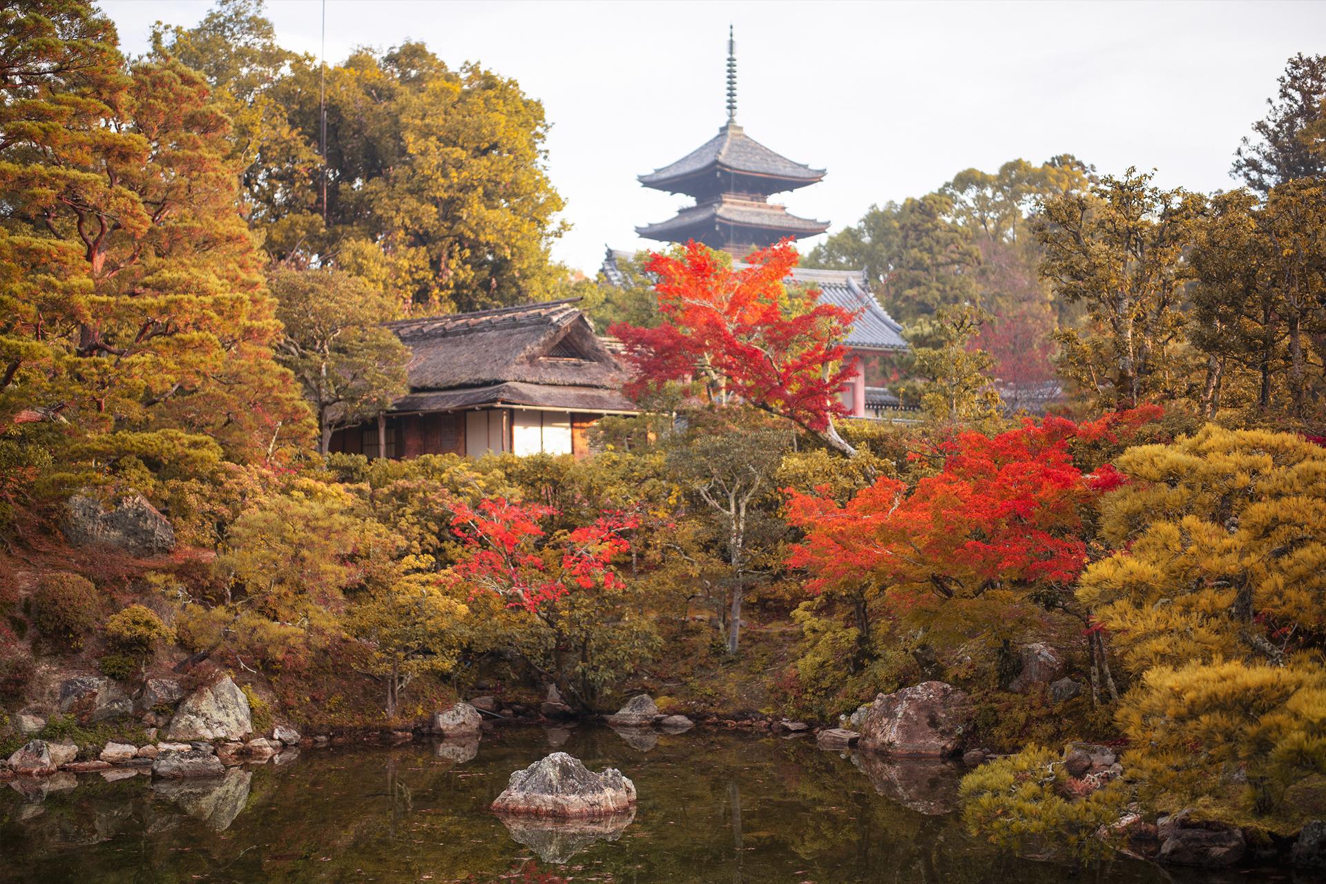 仁和寺 京都の紅葉