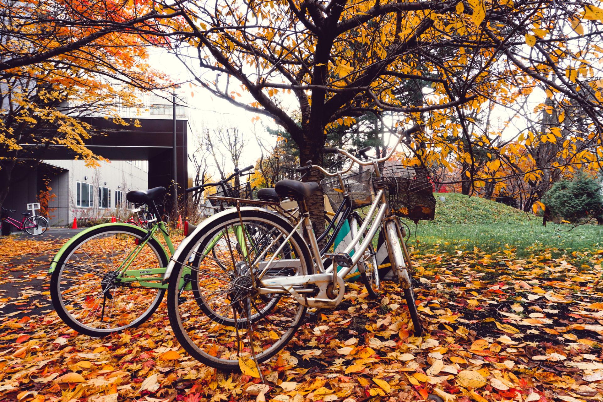 紅葉 自転車