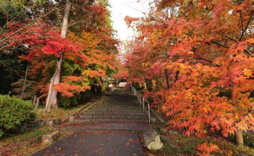 京都 紅葉情報
