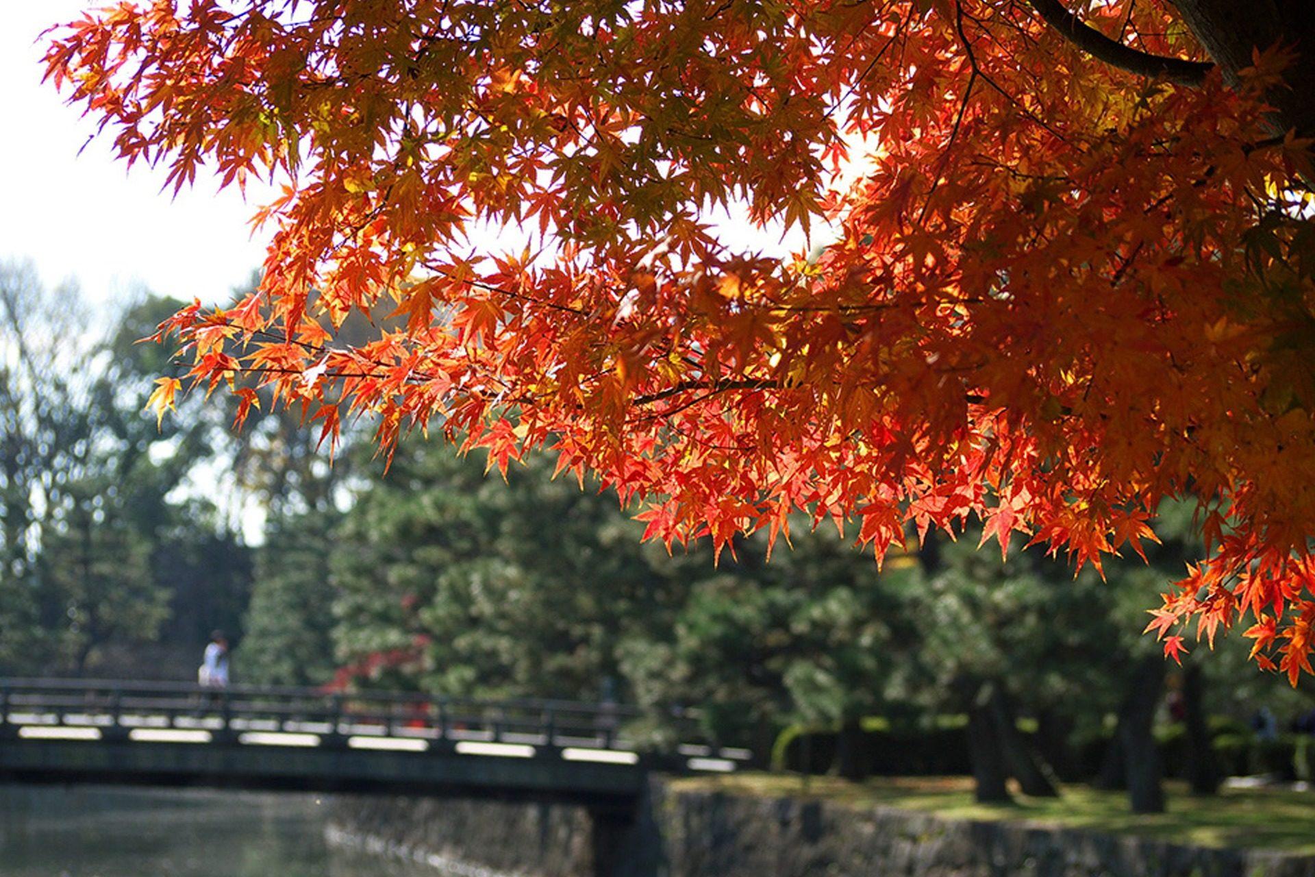 二条城 京都 紅葉