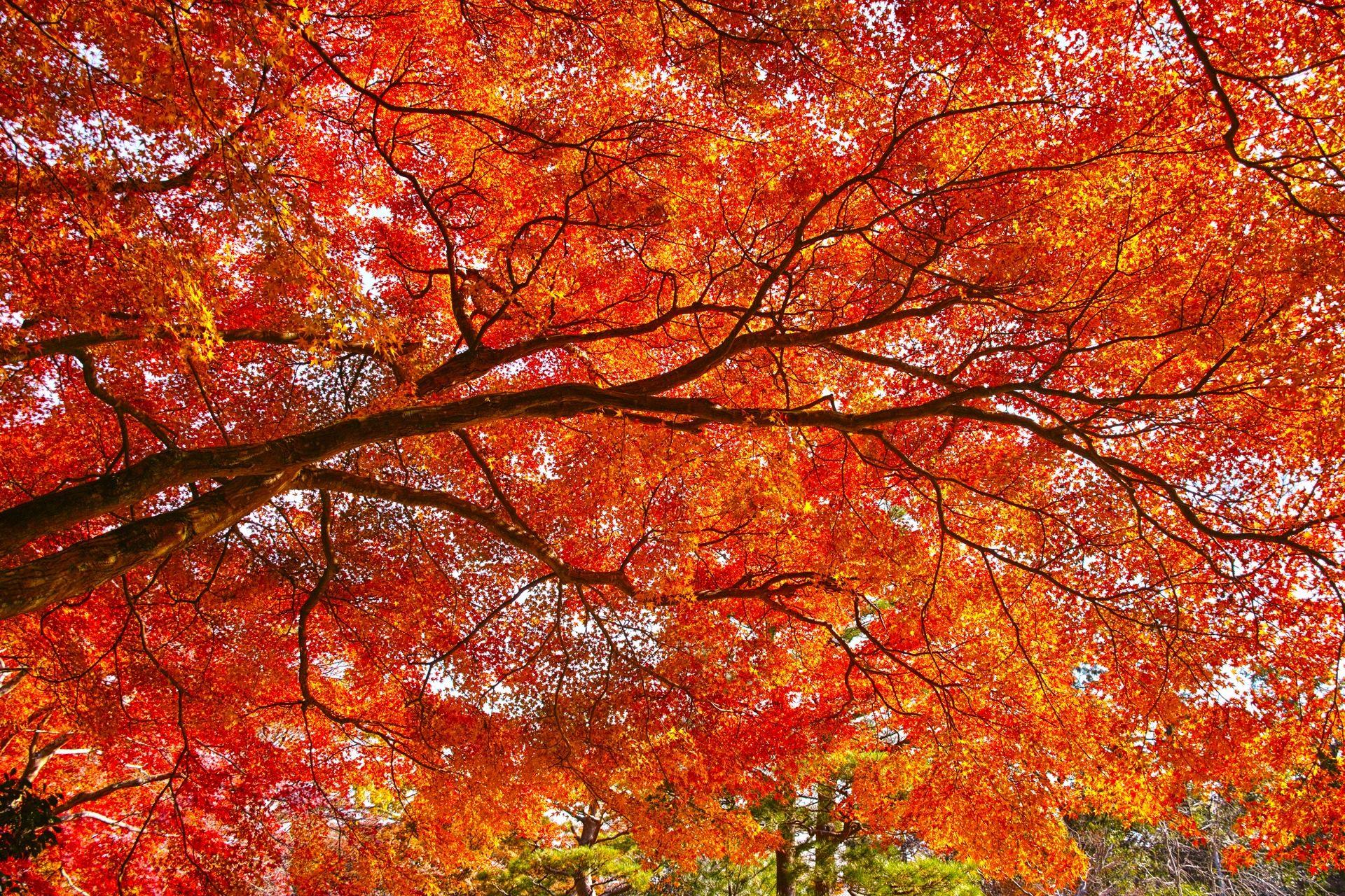 嵯峨野 京都 紅葉