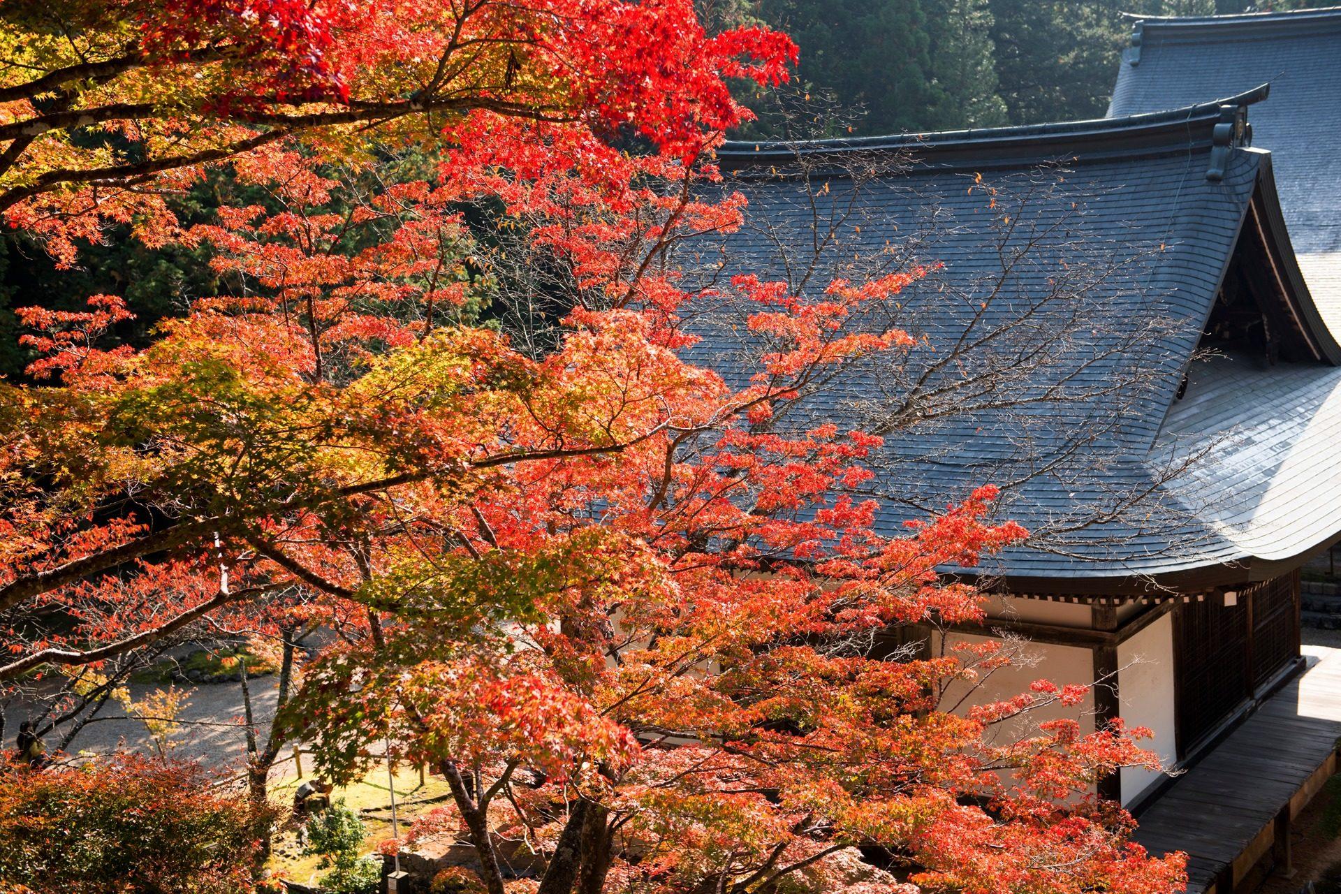 神護寺 京都 紅葉
